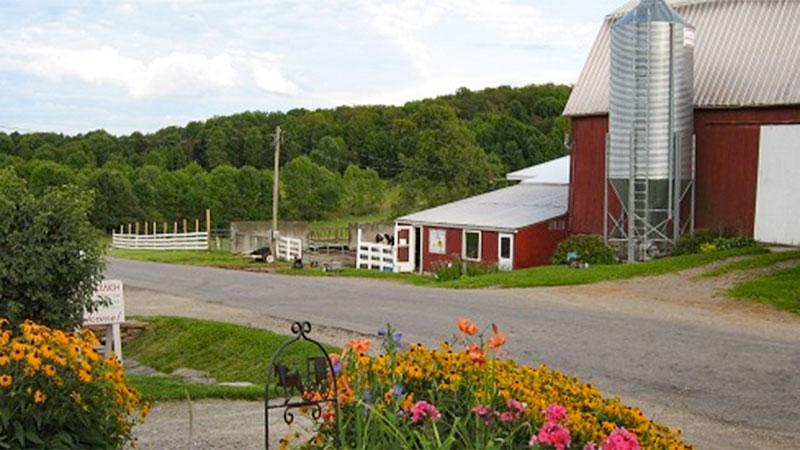Photo - Sunny Cove Farm