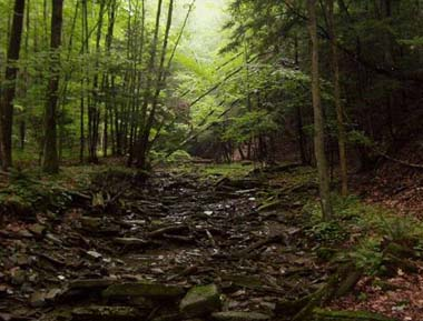 Photo - Bald Mountain State Forest