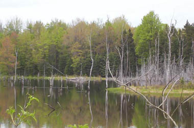 Photo - Keeney Swamp State Forest